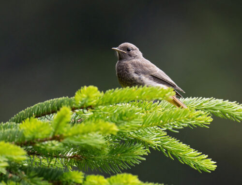 Дан заштите природе 11. април